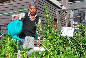 Man watering garden with watering can